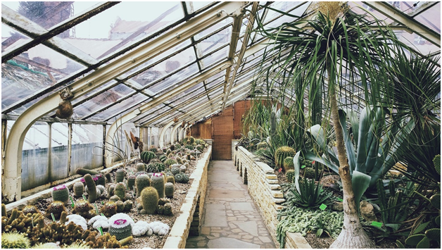 geothermal as green house